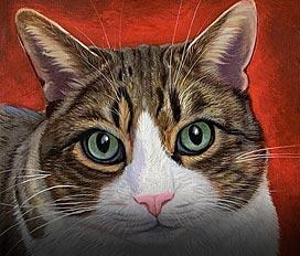 1 Katze
