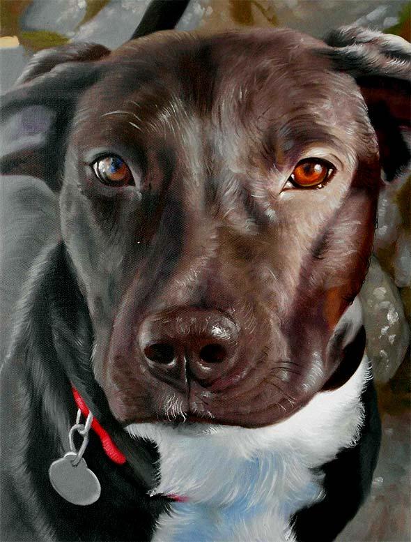 ritratto Pitbull olio da fotografia