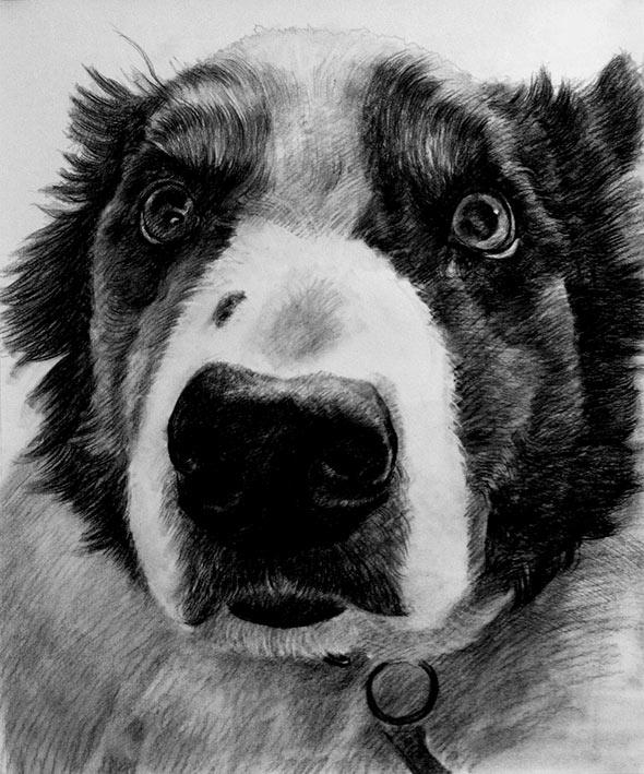 Carboncino da fotografia cane in bianco e nero