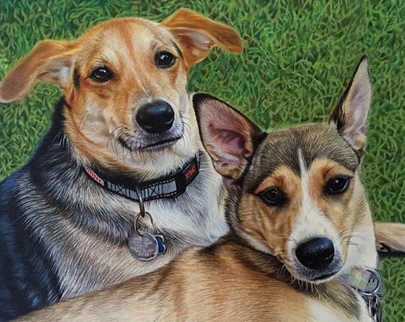 Hundeportrait gemalt in Buntstift