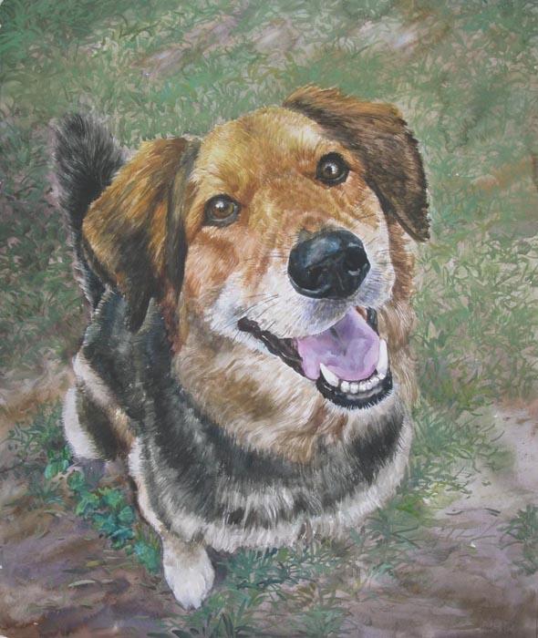 custom watercolor painting of English Shepherd in grass