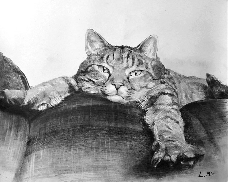 custom cat drawing