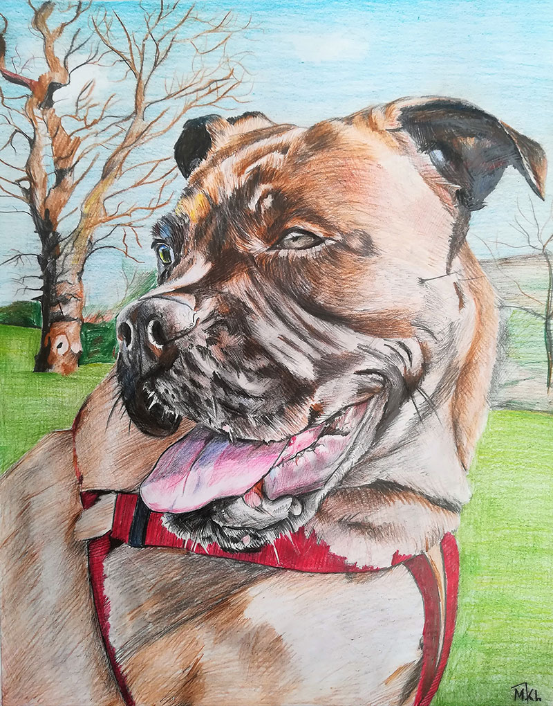 custom colored pencil drawing of a brown down with hazel eye