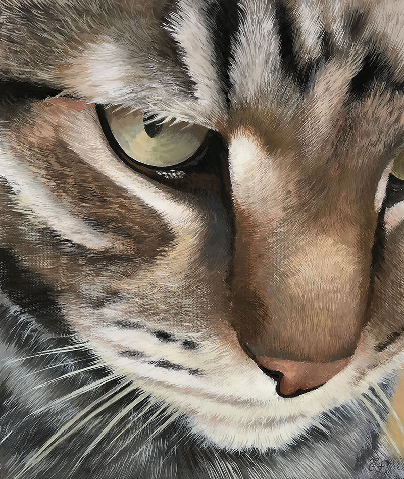 close up pastel portrait of a cat