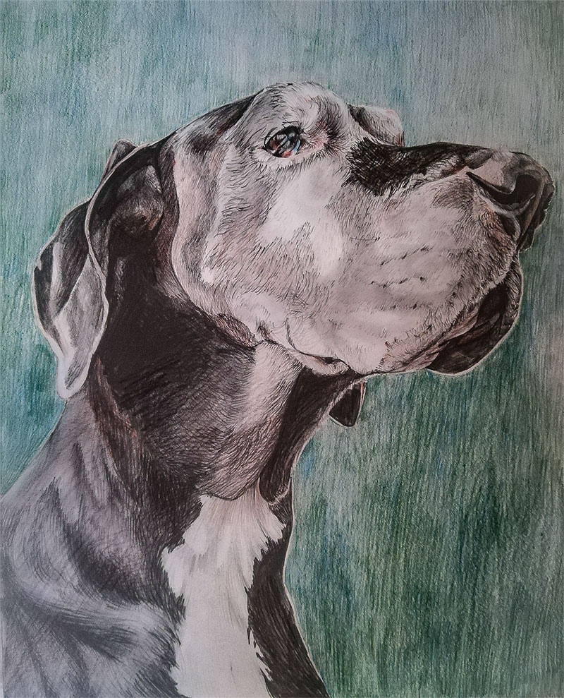 custom colored pencil portrait of grey dog