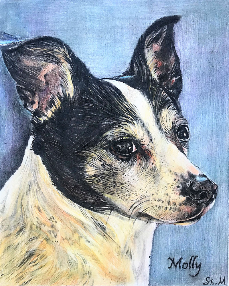 custom colored pencil portrait of black and white dog