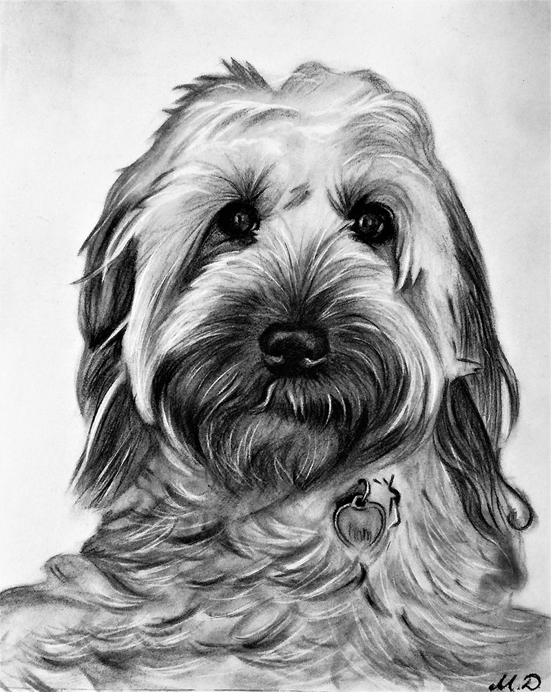 Charcoal dog drawings on canvas