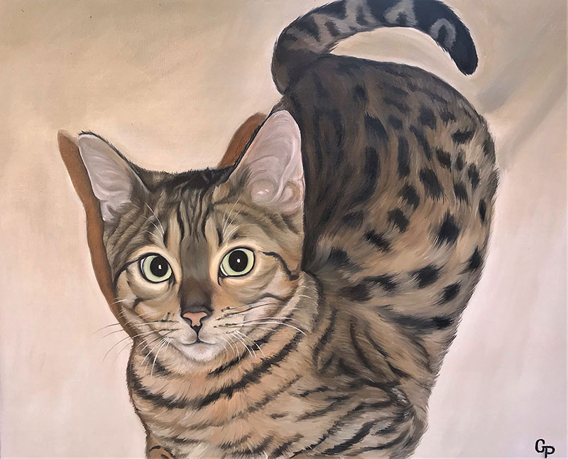 Oil cat portraits on canvas