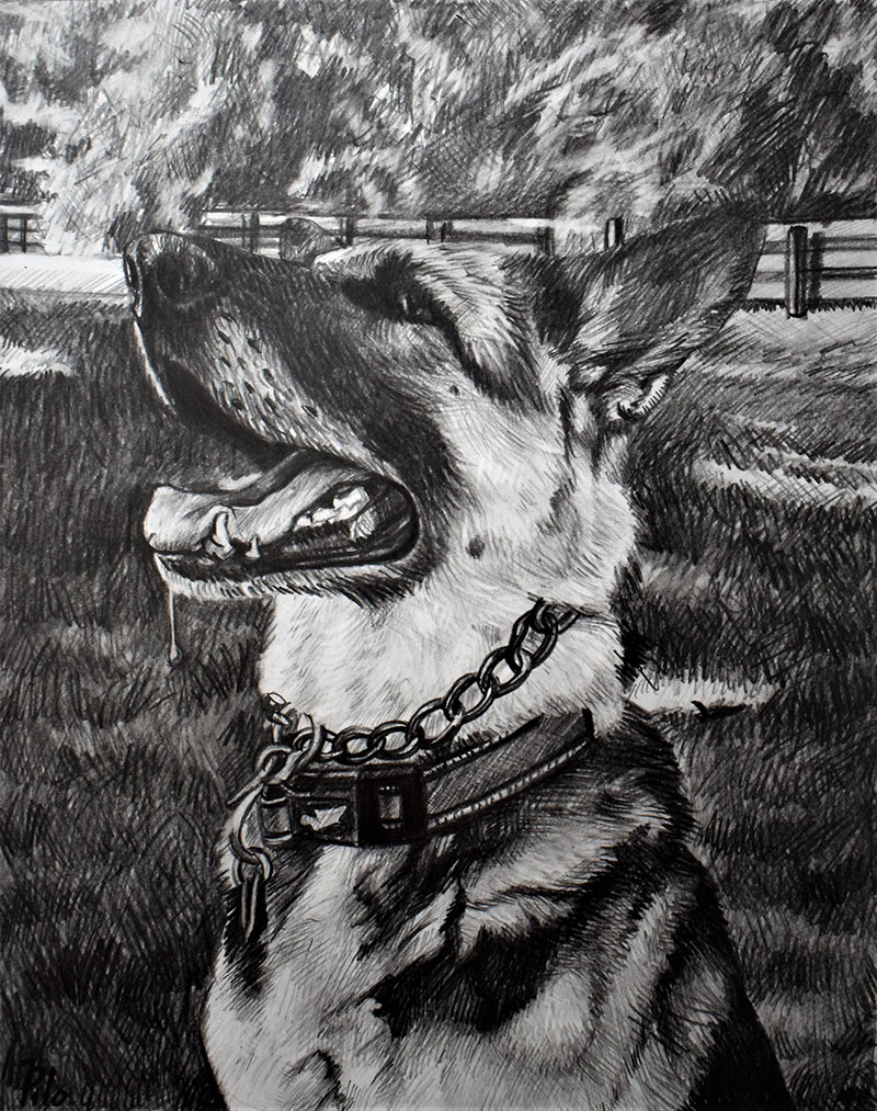 Custom black pencil drawing of a dog