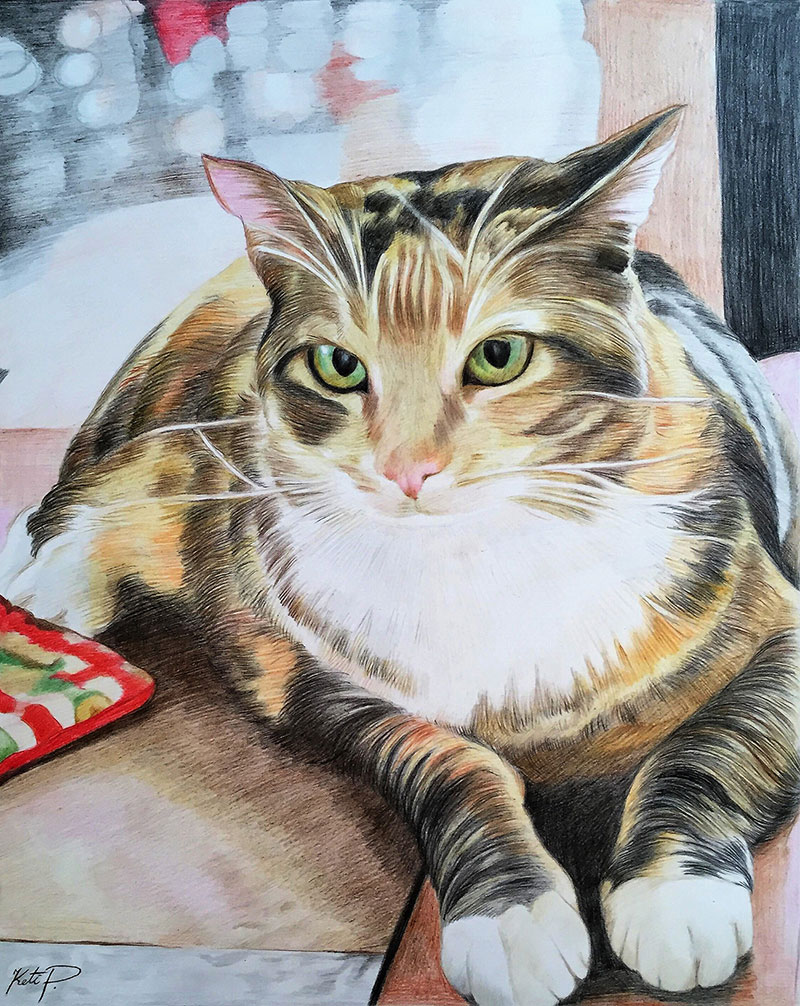 Custom color pencil drawing of a cat