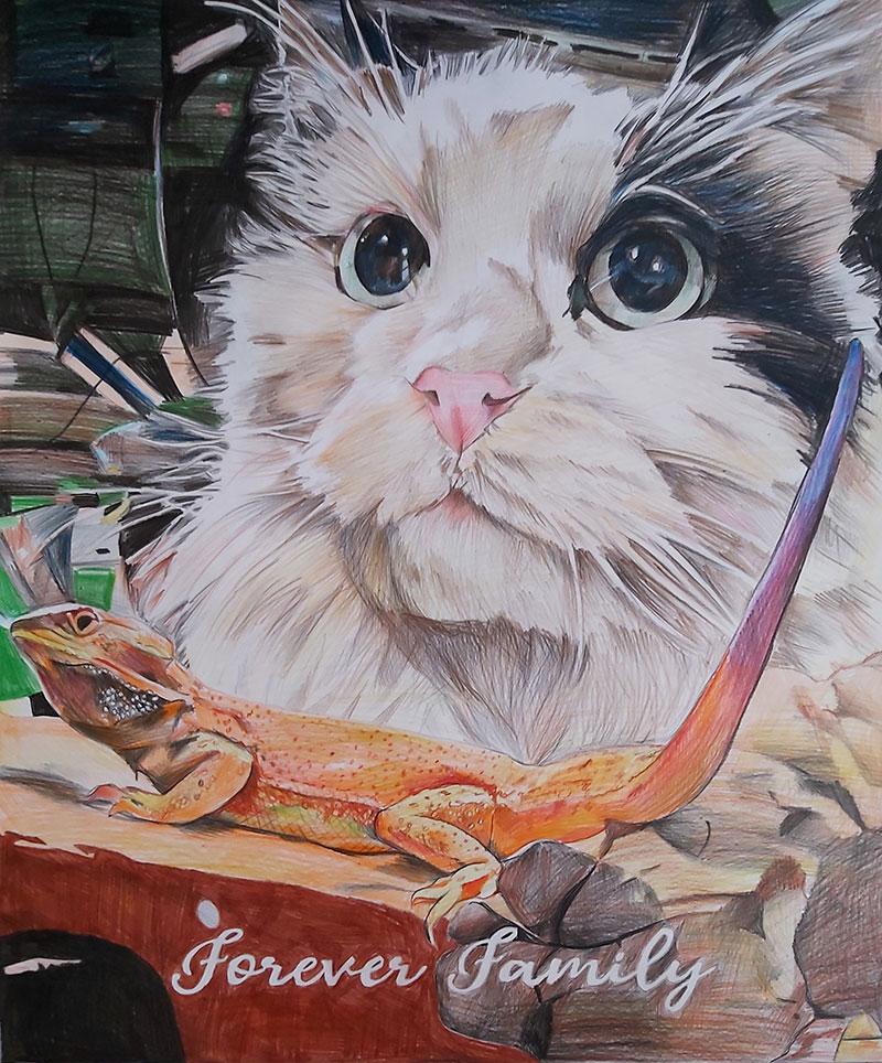 Custom color pencil drawing of a cat