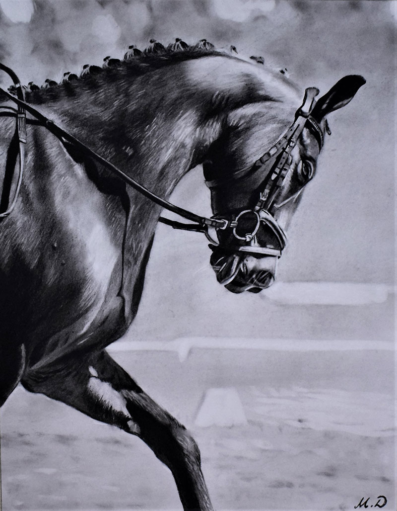 horse charcoal drawing