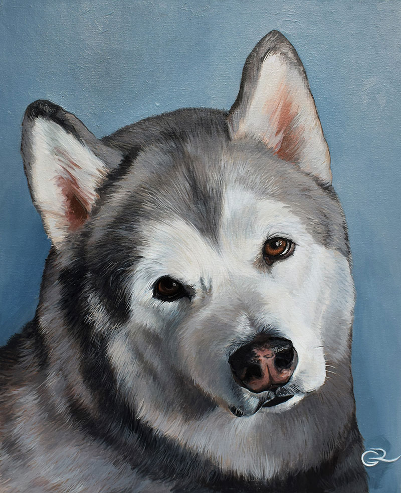custom oil portrait of a husky dog with a blue background