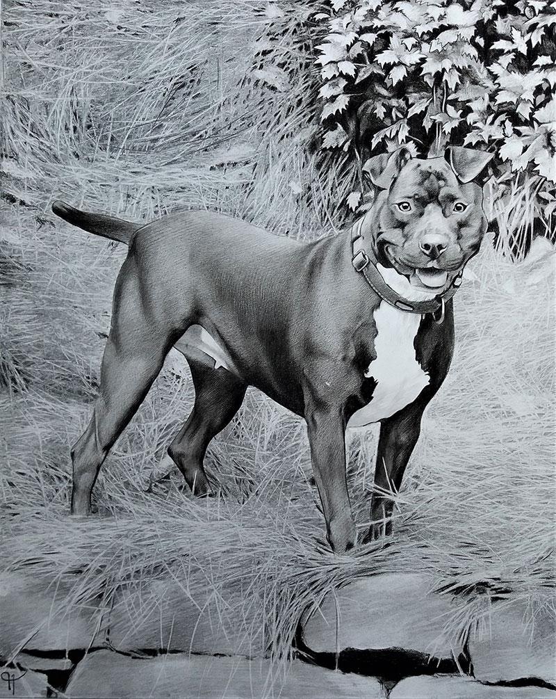 Custom charcoal artwork of a dog