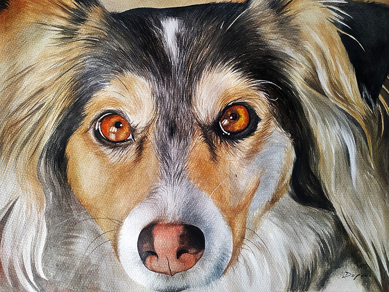 Stunning close up portrait of a colorful dog