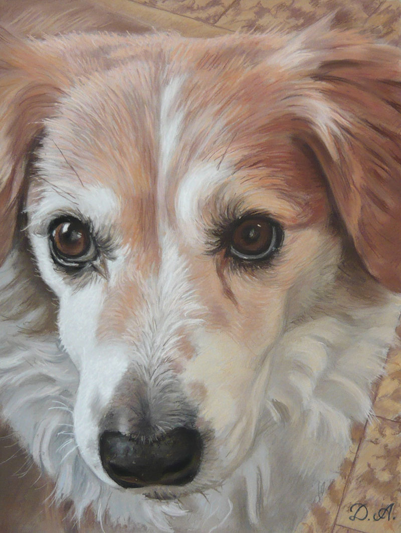 Custom close up pastel painting of a dog
