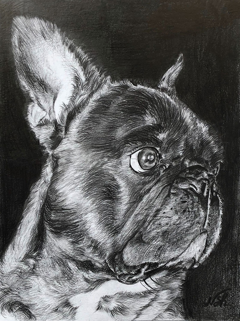 custom pencil drawing of a pug