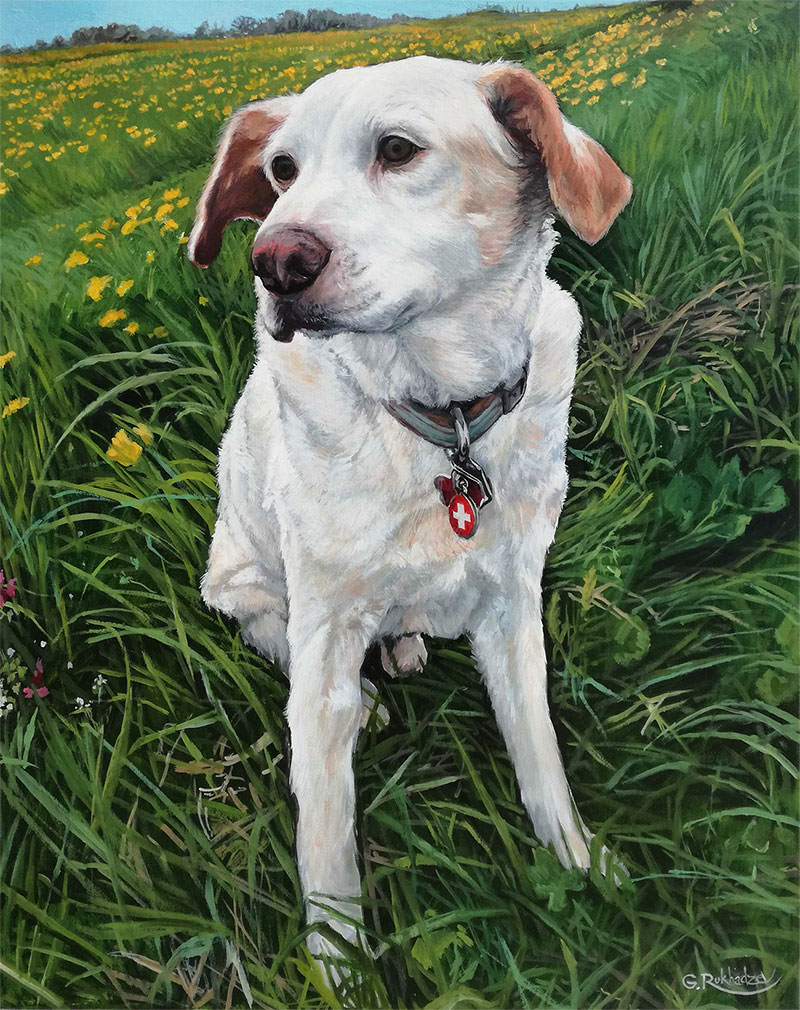 custom oil painting of white dog in yellow flower field