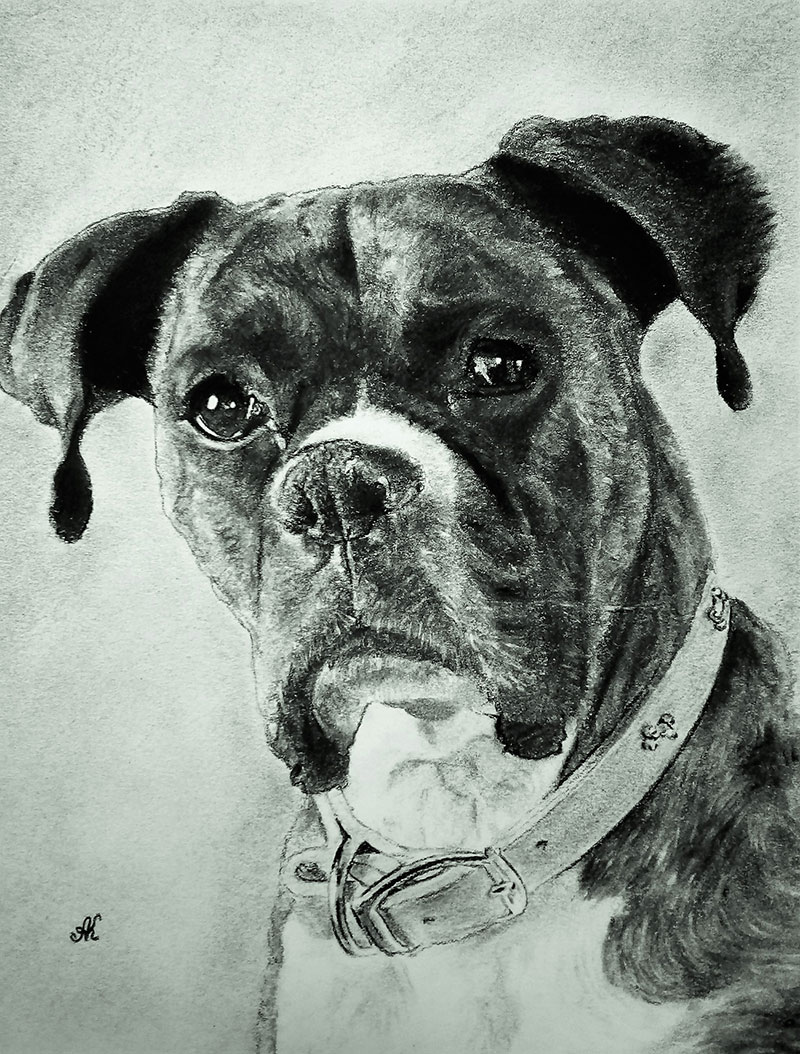 Close up charcoal painting of a dog