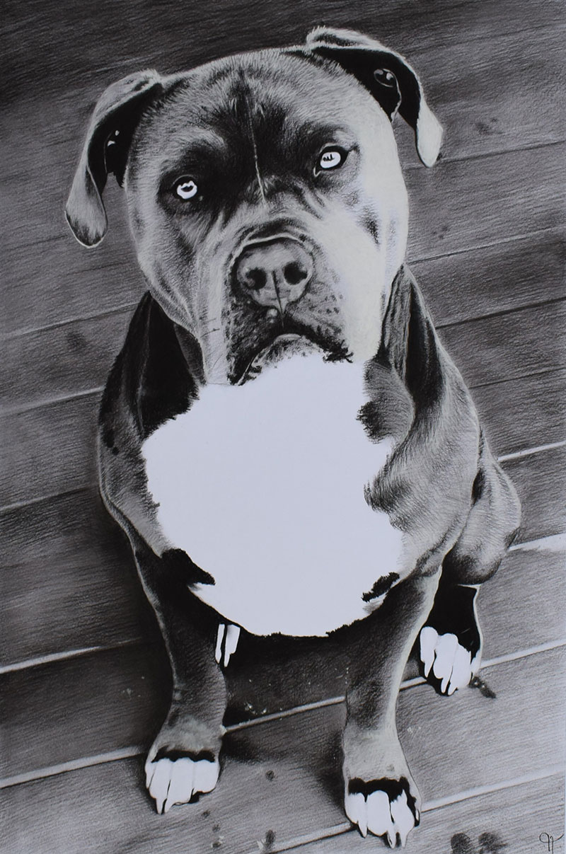 dog portrait in black and white