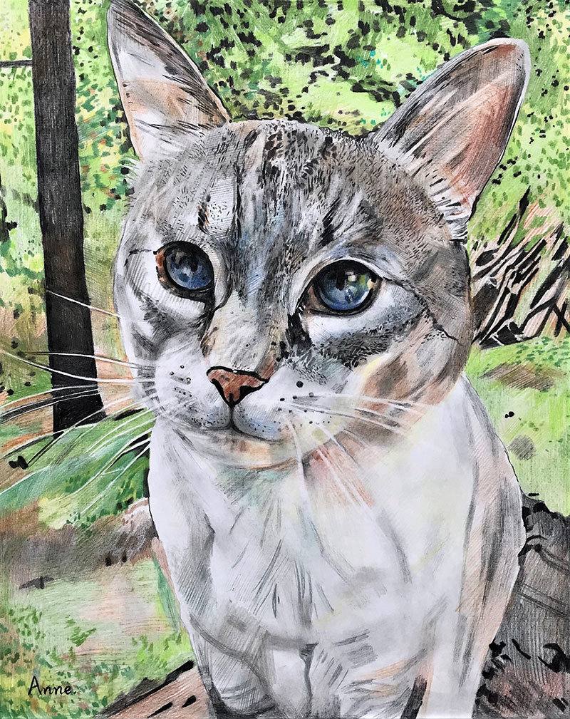 Close up color pencil painting of a cat