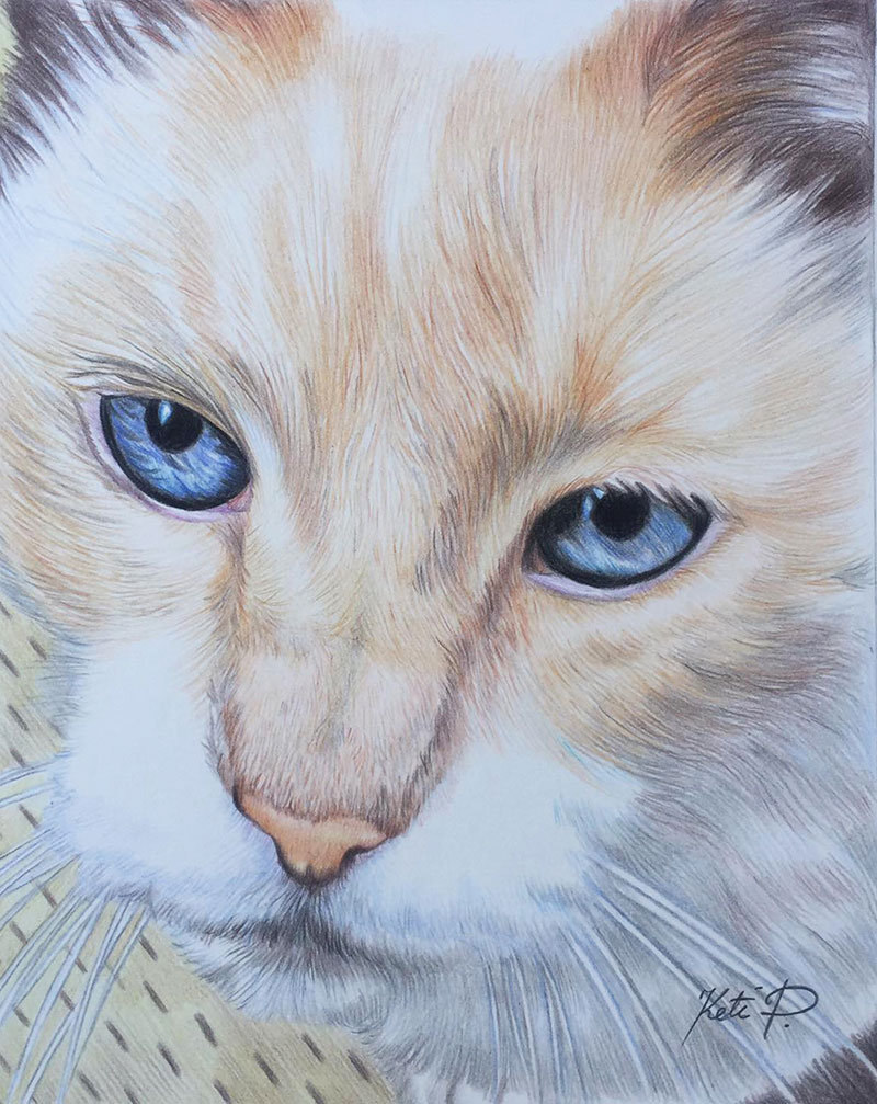 Custom handmade close up color pencil painting of a cat