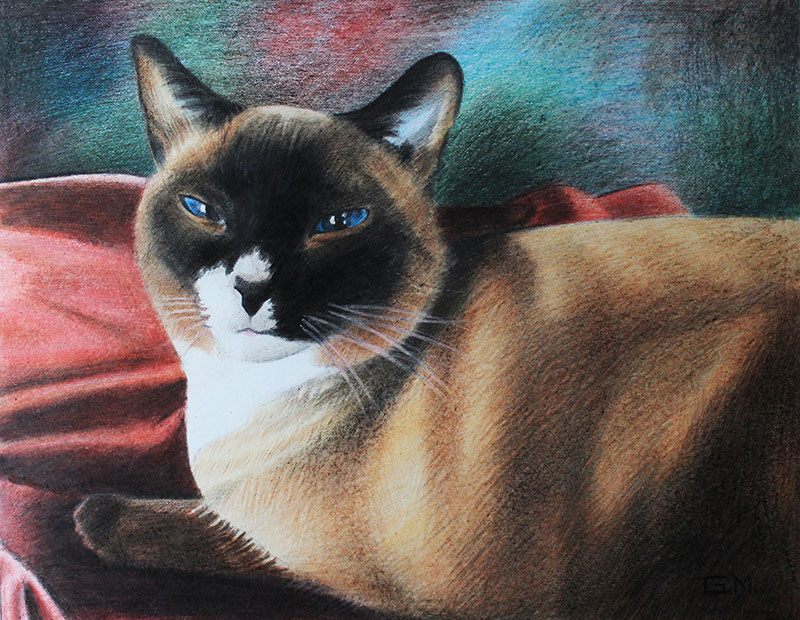 custom handmade color pencil painting of a cat