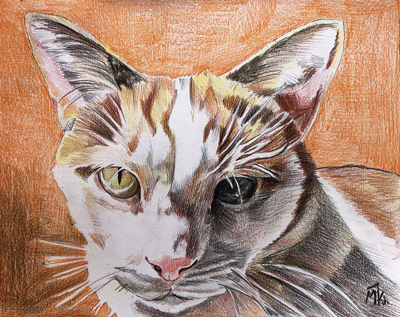 Custom color pencil painting of a cat