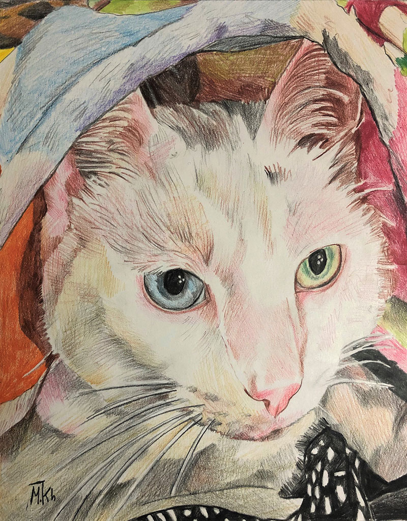 Custom close up color pencil painting of a cat