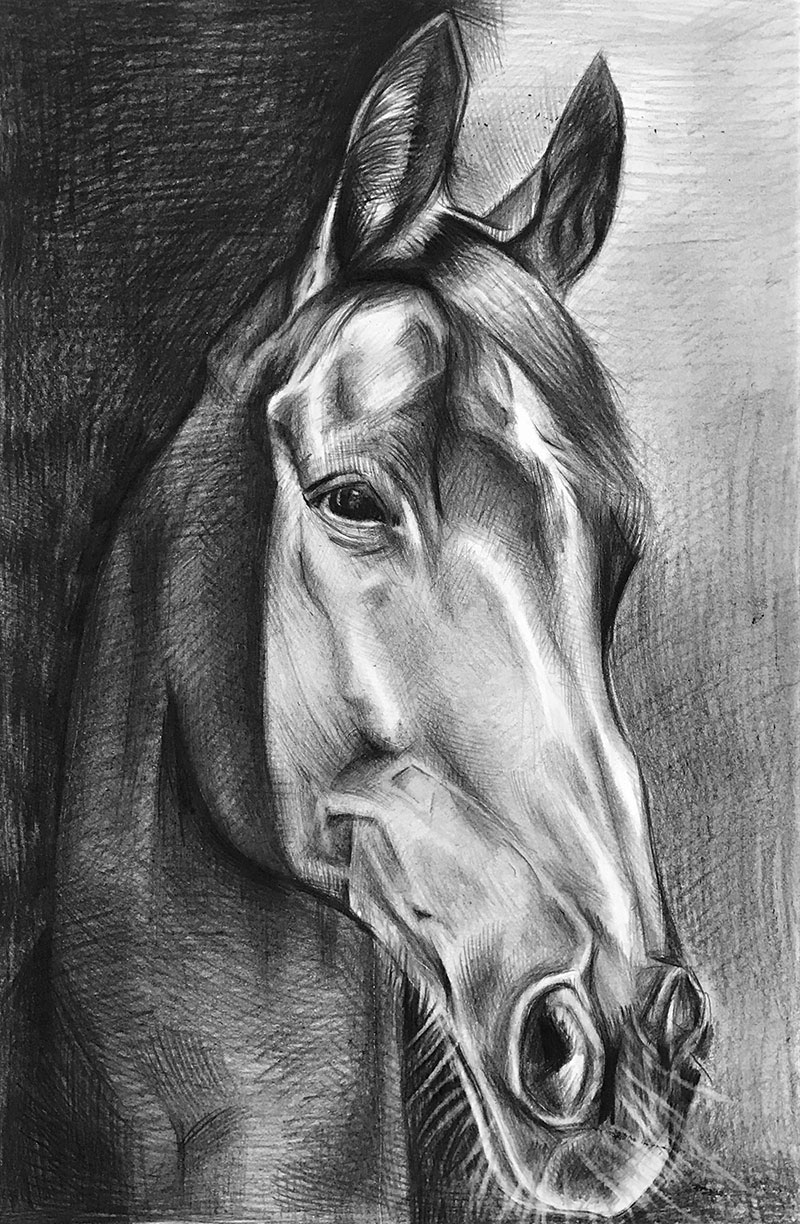 Custom black pencil drawing of a white horse