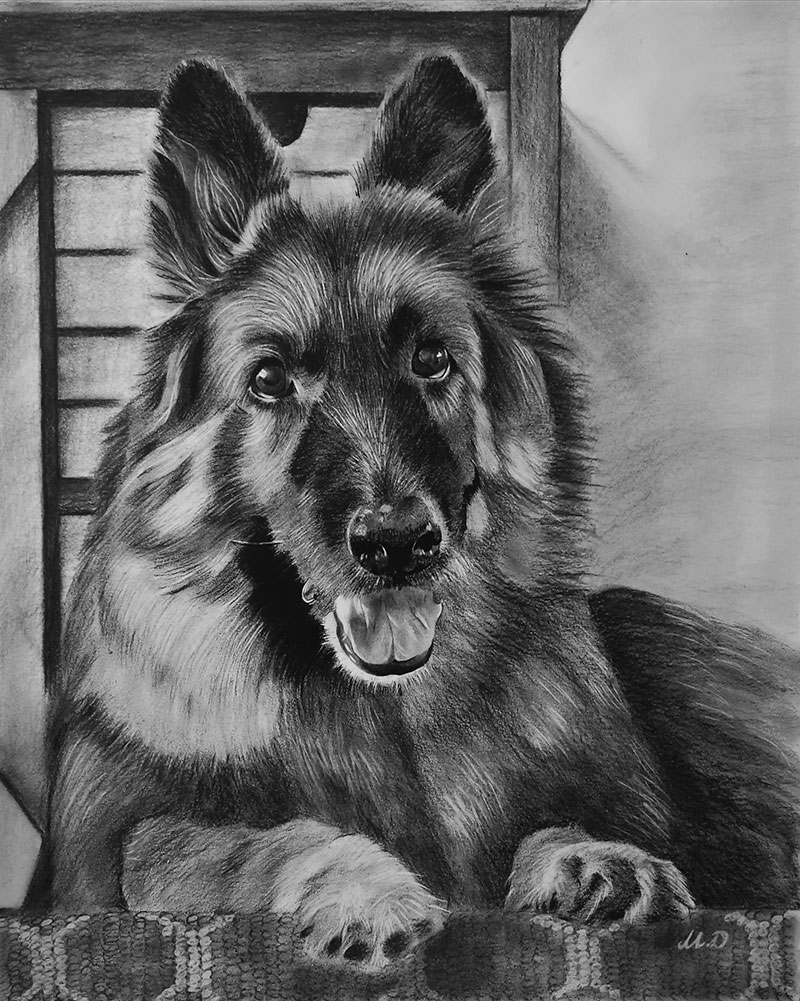 Custom handmade charcoal painting of a dog