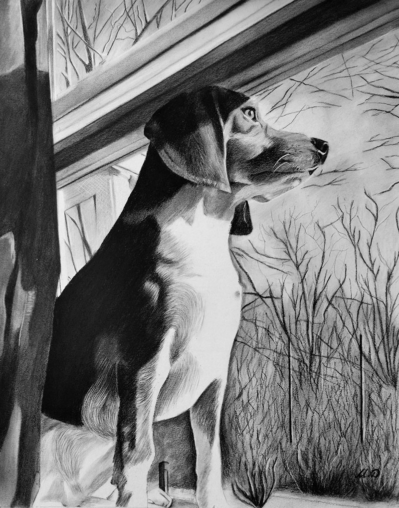 Beautiful charcoal drawing of a dog