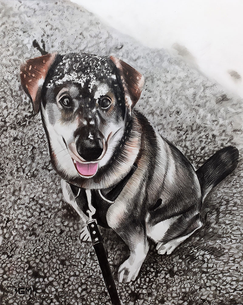 Beautiful color pencil drawing of a dog