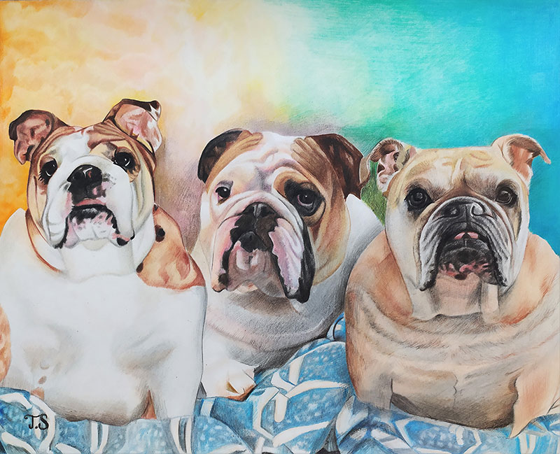 Custom handmade color pencil drawing of three dogs