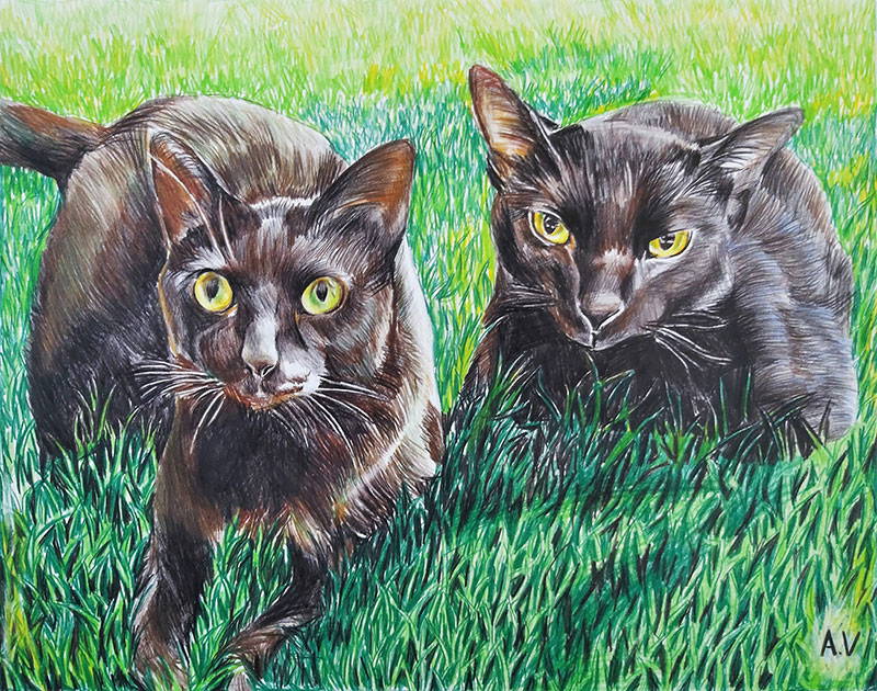 Custom color pencil drawing of two black cats