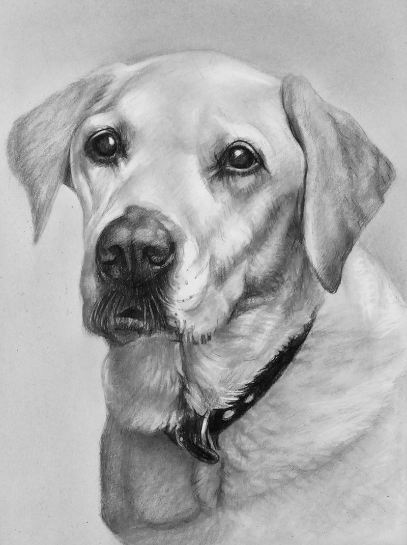 Custom handmade charcoal drawing of a dog