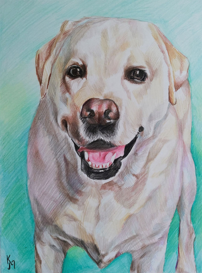 Custom close up color pencil drawing of a dog
