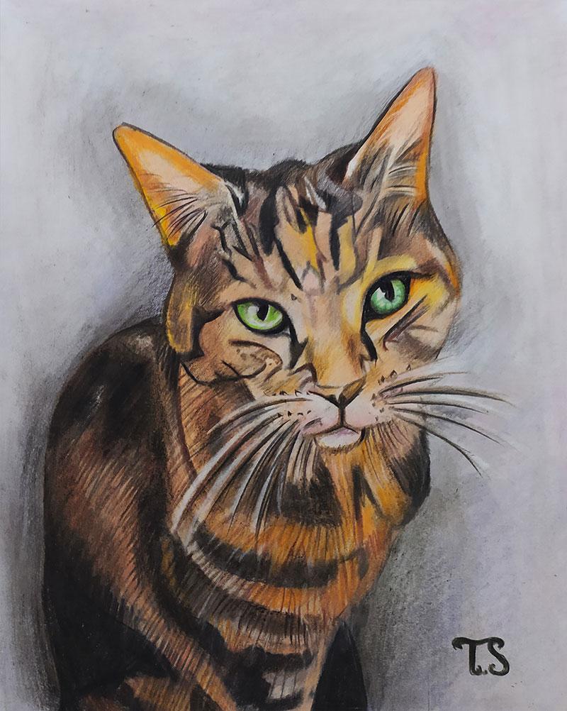 Custom handmade color pencil drawing of a cat
