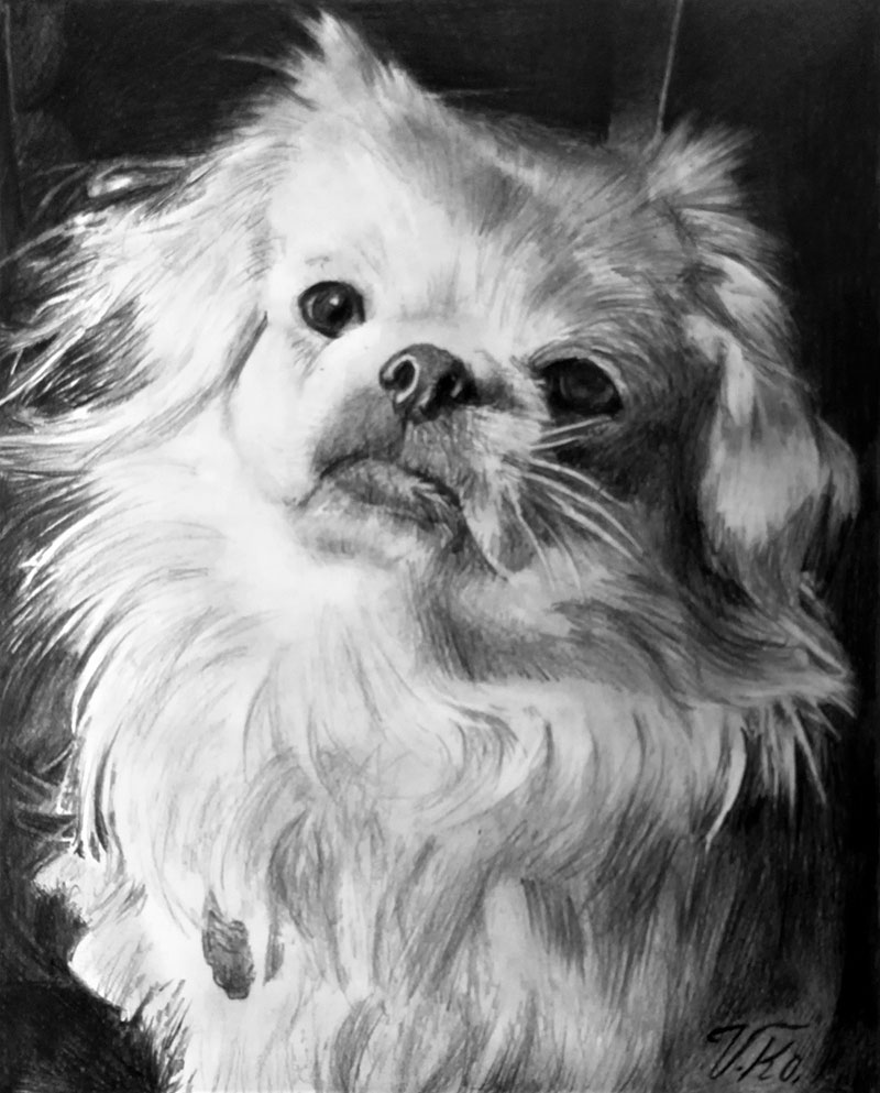 Custom black pencil drawing of a white dog