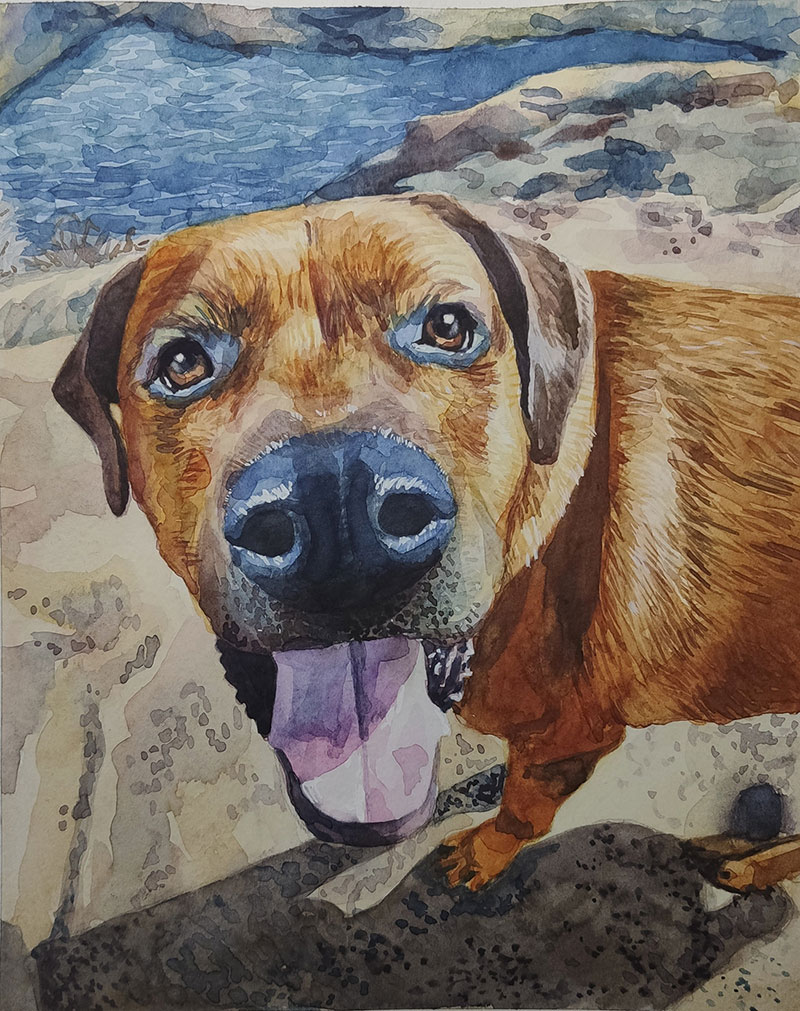 Close up handmade watercolor painting of a dog