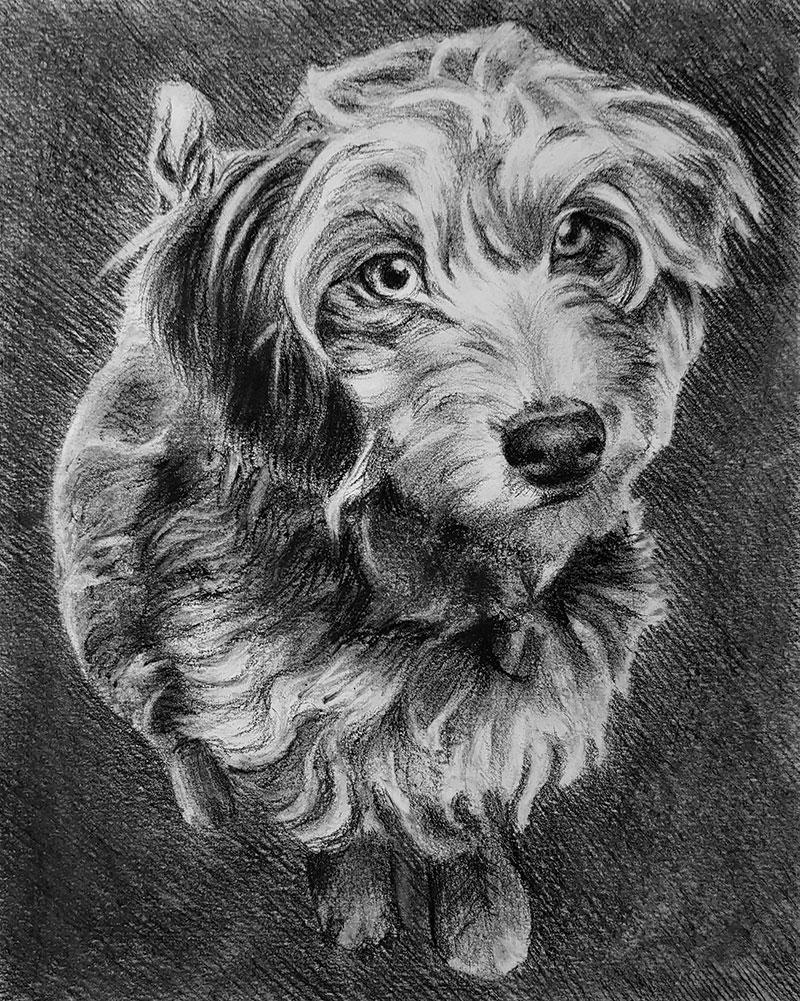 Beautiful close up charcoal drawing of a dog