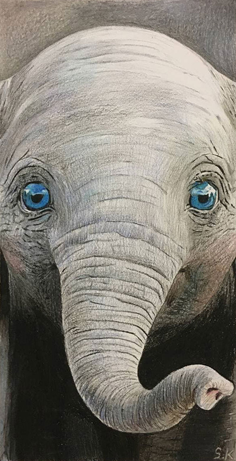 Close up color pencil drawing of a cute elephant