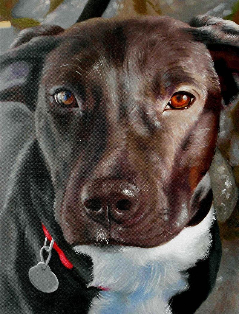 pet portraits - oil dog painting