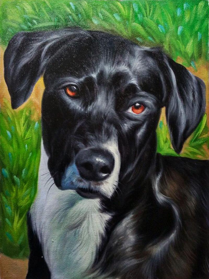 dog in nature portrait