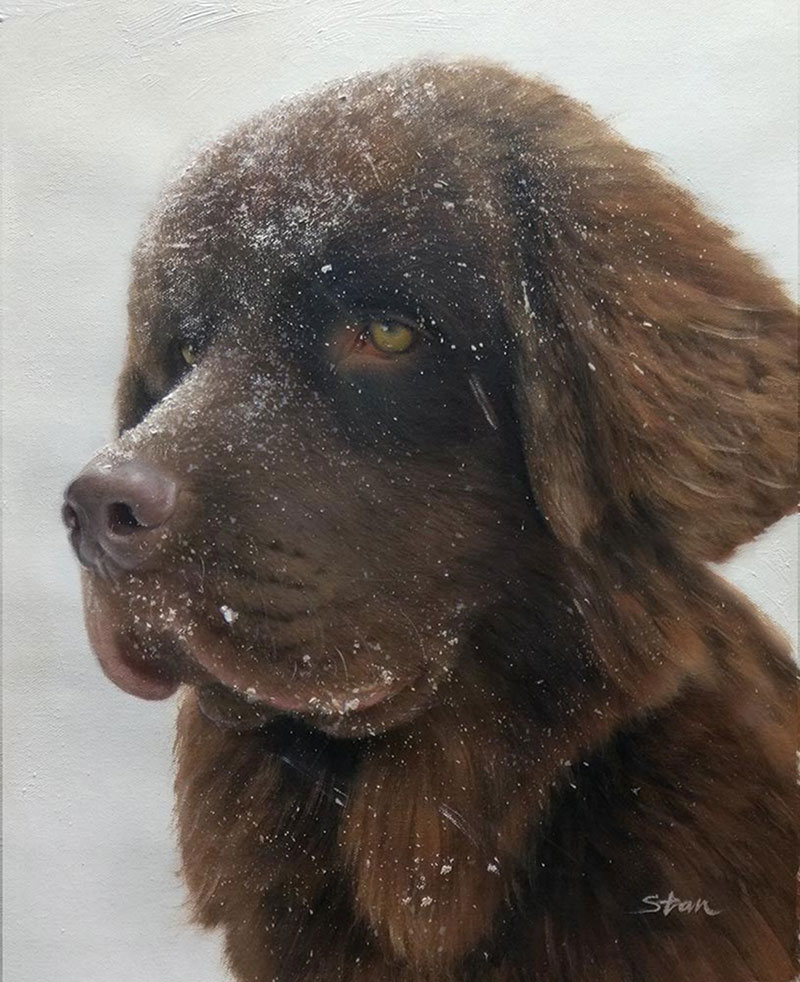 dog in a snow portrait