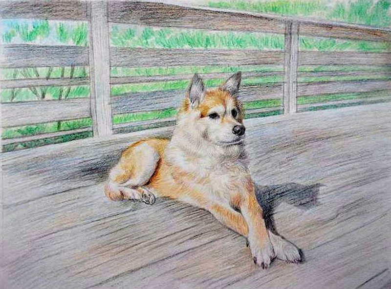 custom colored pencil drawing of a dog on a bridge