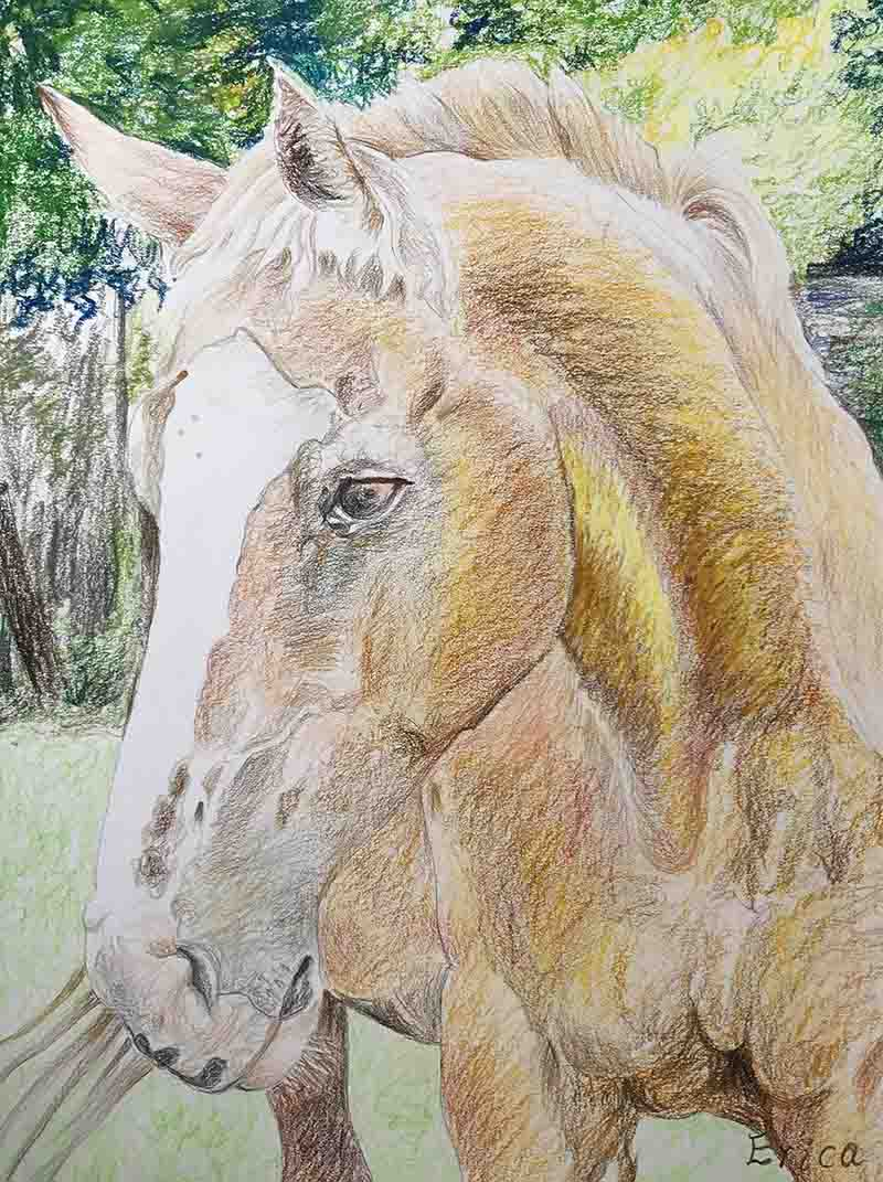 color pencil majestic horse painting