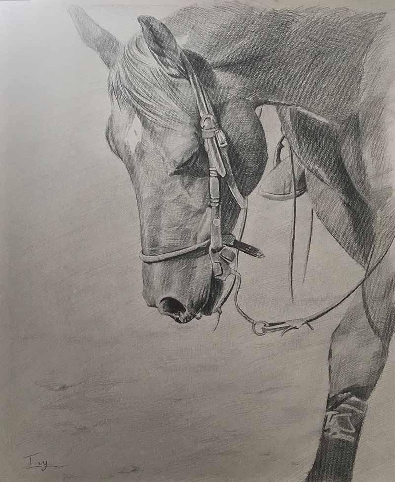 black white sketch charcoal black pencil horse