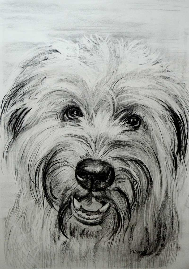 Wanted to surprise my wife with a large charcoal drawing of our 1-year old Soft Coated Wheaten Terrier, Paisan. The drawing was a big hit. My wife and I love it.