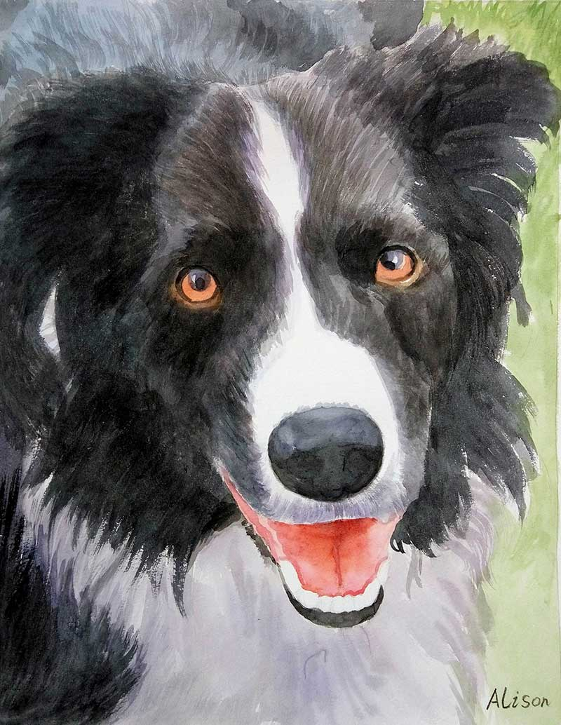 watercolor painting of black and white Australian Shepard